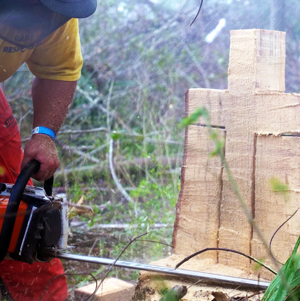 cross cut into tree